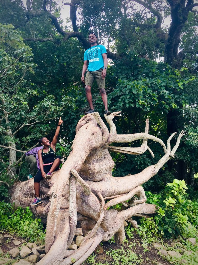 Elephant tree at Iyake lake​